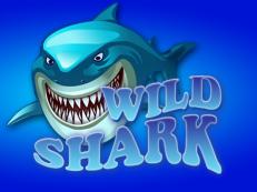 wild shark slot amatic