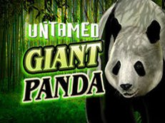 untamed giant panda slot microgaming